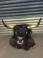 Bulls/minotaur Head - Prop Hire from The Props List